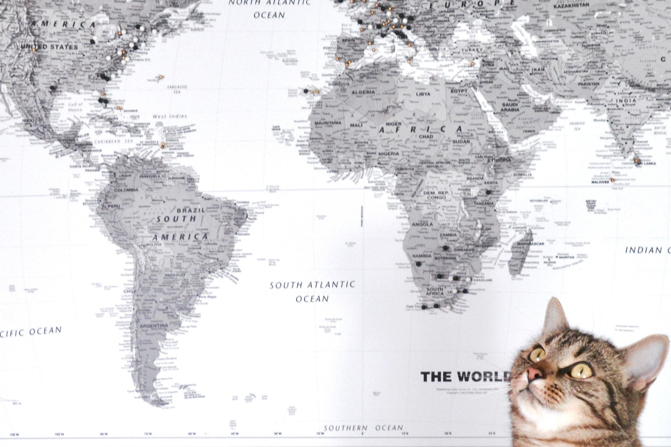 Cat & world map