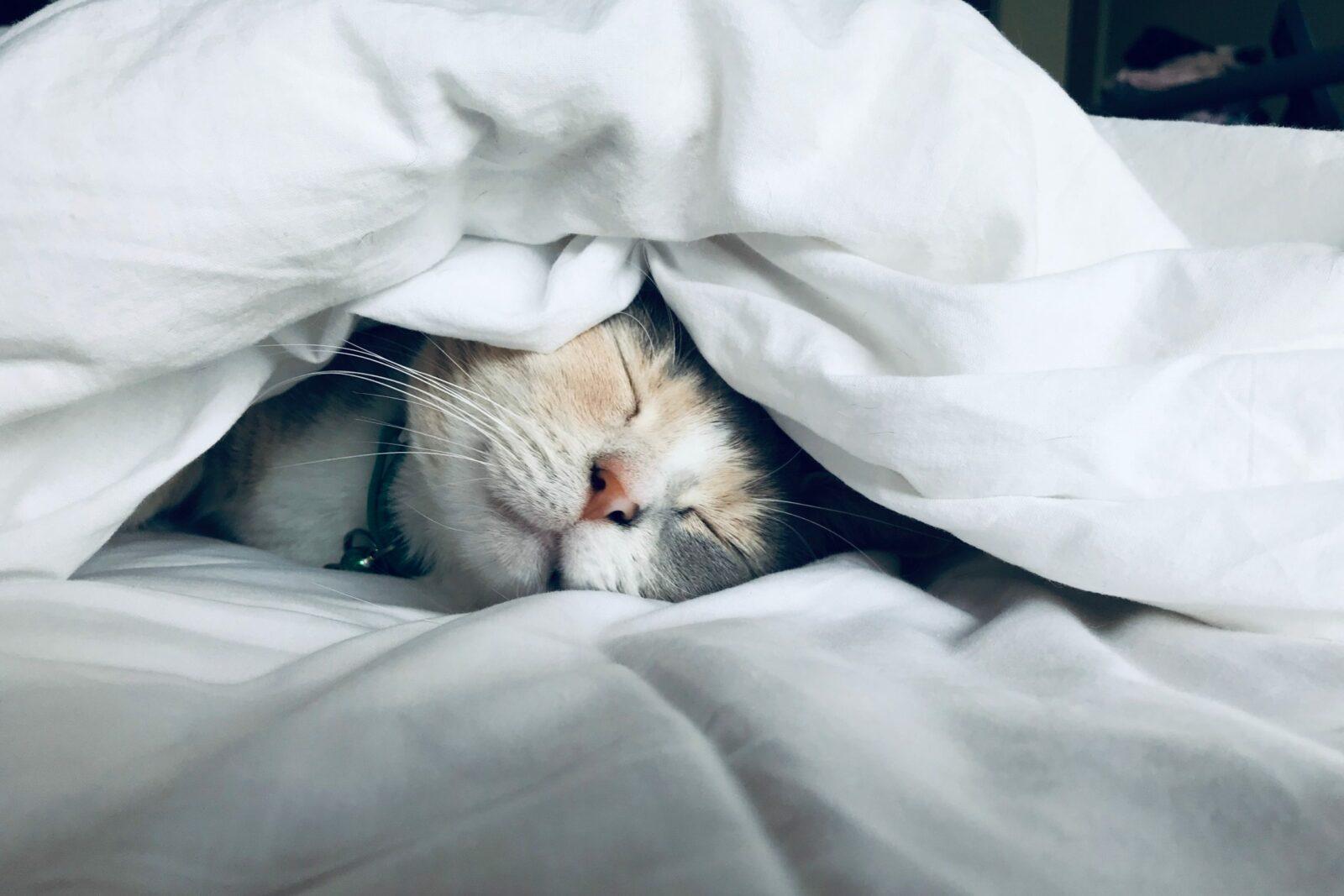 Tidur Yang Mencukupi untuk menjaga kulit anda