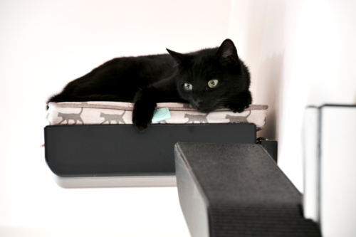 Black cat resting on Catipilla High Plate