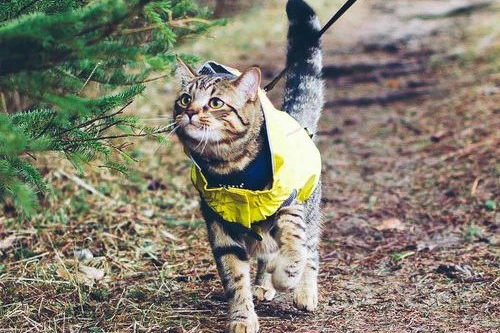 Hiking with a cat