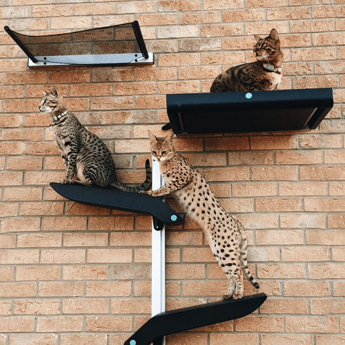 Cats on climbers