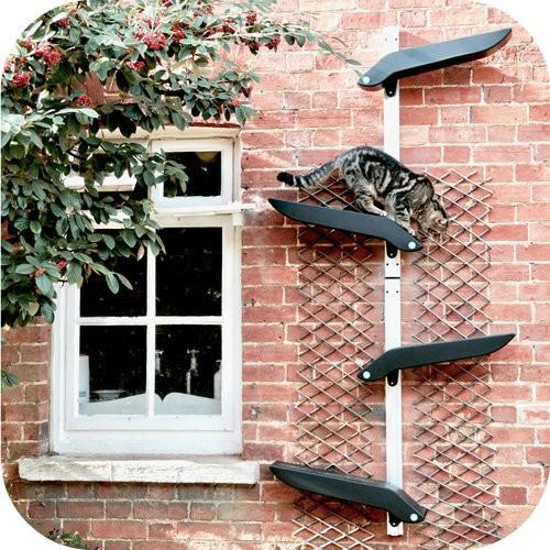 outdoor cat climbing frame