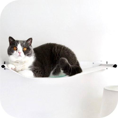 Cat on hammock