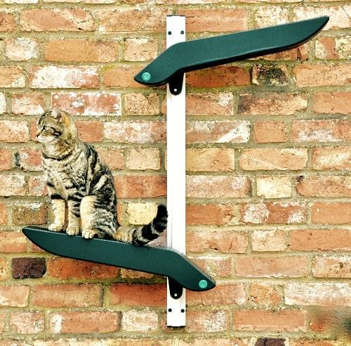 cat on climber