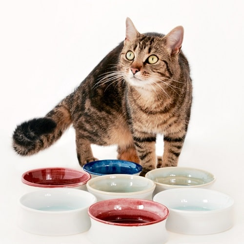 Cats with bowls