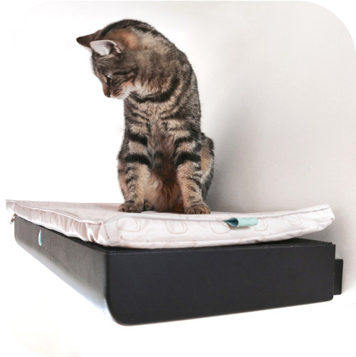 Cat on a wall-mounted bed