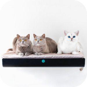 3 cats on Catipilla Cushion