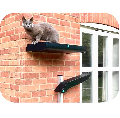 cat on a wall-mounted platform