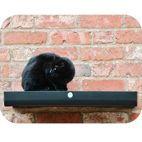 black cat on a wall-mounted platform