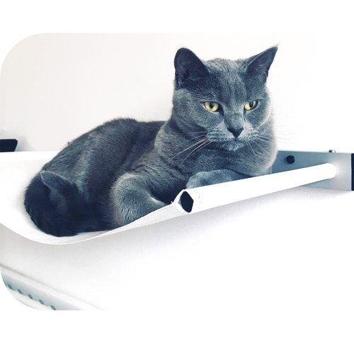 Cat resting on a hammock