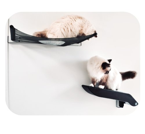 Cats resting on hammock and on climber