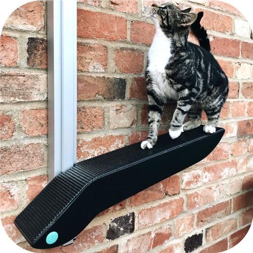 cat on a climber