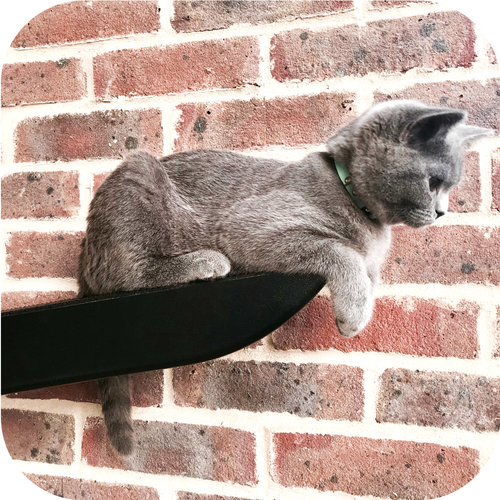 cat resting on a climber
