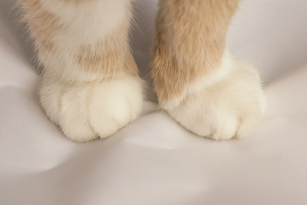 cat kneading - catipilla blog post