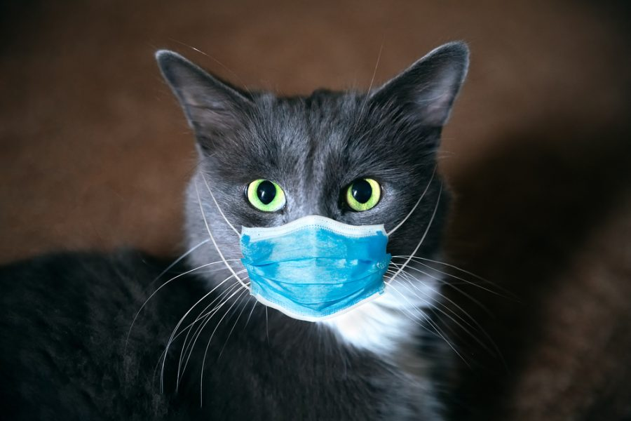 cat with a human face mask