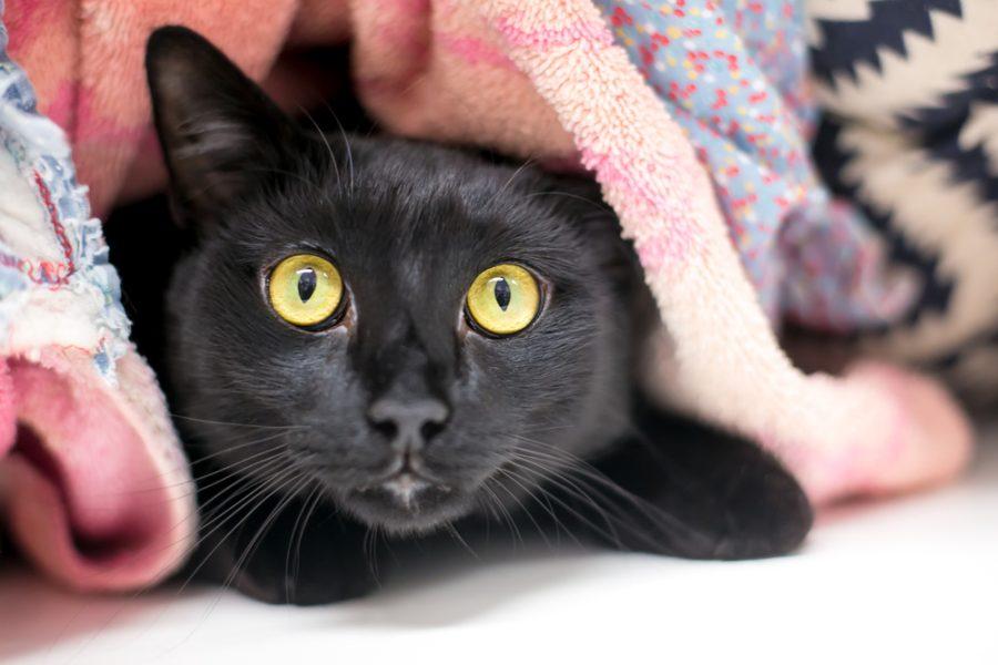signs of an anxious cat - Catipilla blog