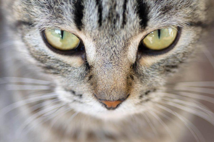 cats communicate
