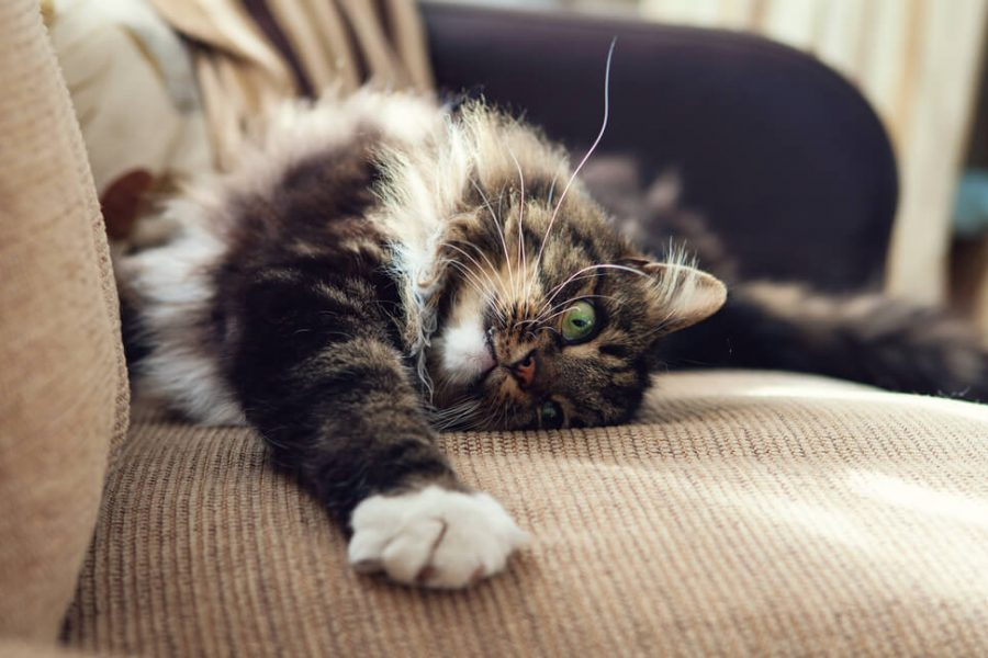 Protect Furniture From Cats